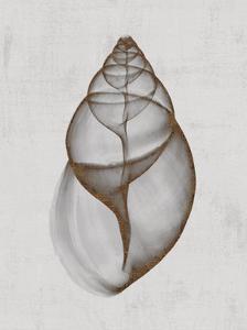 Achatina Shell by Bert Myers