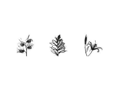 X-Ray Foxglove Triptych