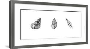 X-Ray Landsnail Triptych by Bert Myers