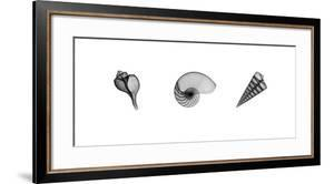 X-Ray Nautilus Triptych by Bert Myers