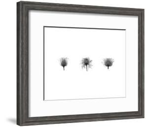 X-Ray Rose Triptych by Bert Myers
