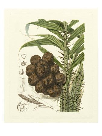 Island Fruits I