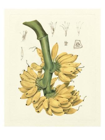 Island Fruits II