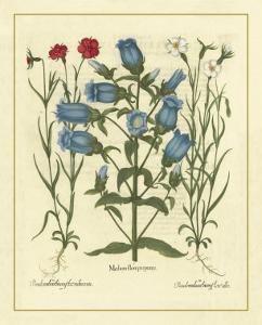 Besler Floral IV by Besler Basilius