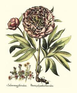 Framboise Floral III by Besler Basilius