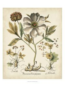 Beautiful Vintage Botanical & Illustration artwork for sale, Posters