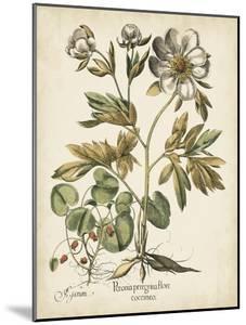 Ivory Peonies III by Besler Basilius