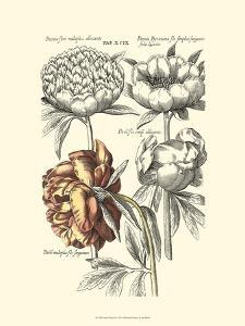 Tinted Floral I by Besler Basilius