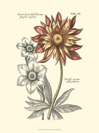 Tinted Floral III by Besler Basilius