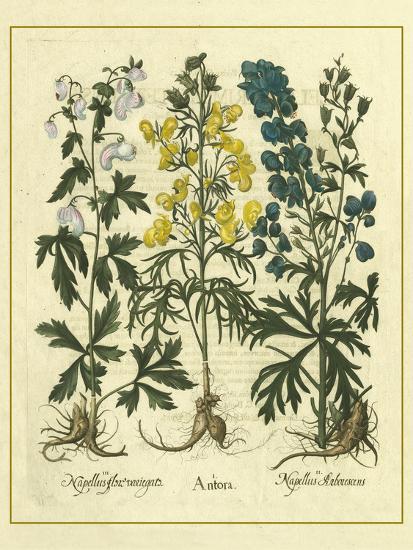 Besler Floral I-Besler Basilius-Art Print
