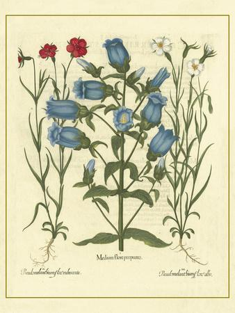https://imgc.artprintimages.com/img/print/besler-floral-iv_u-l-p8l9ra0.jpg?p=0
