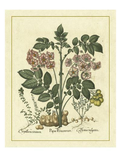 Besler Floral V-Besler Basilius-Art Print