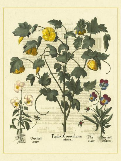 Besler Floral VI-Besler Basilius-Art Print