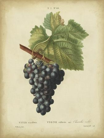 Antique Bessa Grapes I