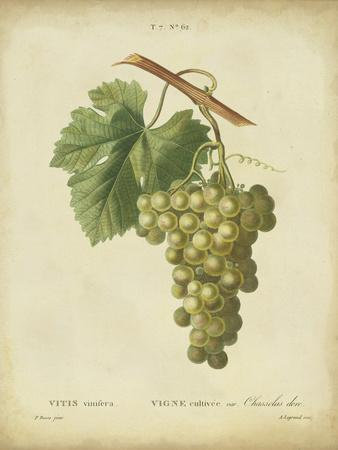 Antique Bessa Grapes II