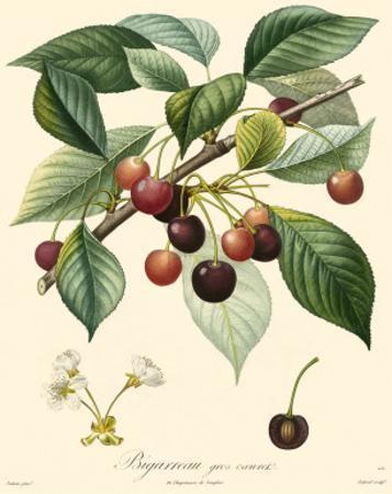 Bessa Cherries by Bessa