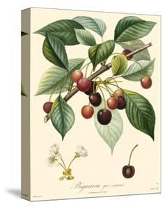Cherries by Bessa