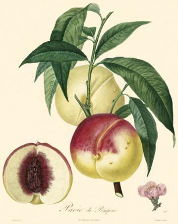 Peaches by Bessa