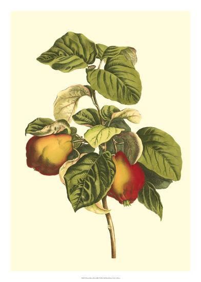 Bessa Pear-Bessa-Giclee Print