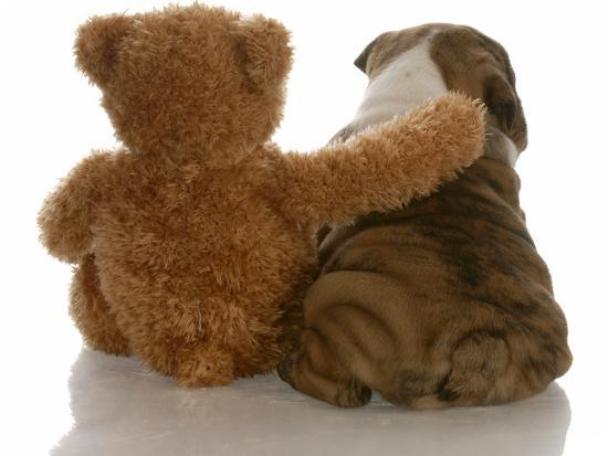 Best Friends - English Bulldog Puppy Sitting Beside Bear-Willee Cole-Photographic Print