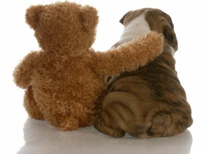 https://imgc.artprintimages.com/img/print/best-friends-english-bulldog-puppy-sitting-beside-bear_u-l-q10351h0.jpg?p=0