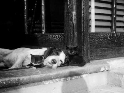 Best of Friends--Photographic Print