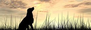 Concept or Conceptual Young Beautiful Black Cute Dog Silhouette in Grass or Meadow over a Sky at Su by bestdesign36