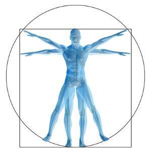 Vitruvian Human or Man, Anatomy Body for Biology by bestdesign36