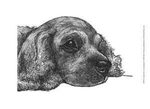 Charlie the Cocker Spaniel by Beth Thomas