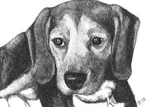 Lindy the Beagle by Beth Thomas