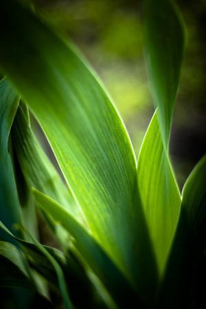 Abstract Green Leaves I