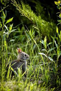 Baby Bunny I by Beth Wold