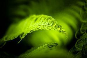 Fern Leaves II by Beth Wold