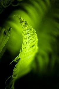 Fern Leaves III by Beth Wold