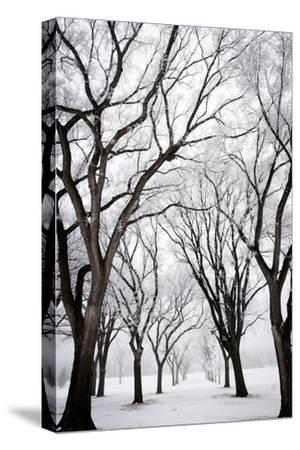 Frosted Trees I