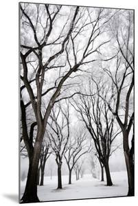 Frosted Trees I by Beth Wold