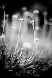 Garlic by Beth Wold