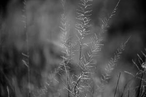 Grasses I by Beth Wold