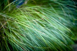 Grasses III by Beth Wold