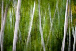 Green Abstract I by Beth Wold