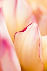Petals I by Beth Wold