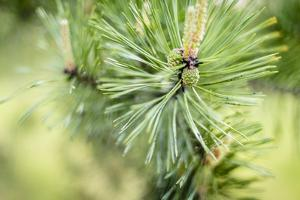 Pine Needles I by Beth Wold