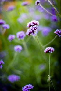 Purple Flowers by Beth Wold