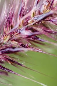 Purple Grasses II by Beth Wold
