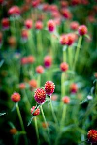 Red Flowers by Beth Wold