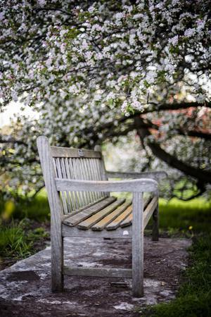 Spring Bench III