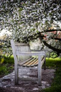 Spring Bench III by Beth Wold