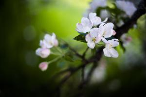 Spring Blossoms I by Beth Wold