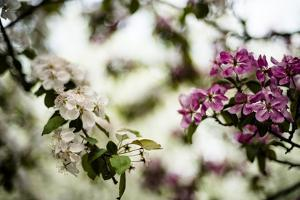 Spring Blossoms VI by Beth Wold