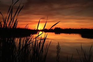 Sunset III by Beth Wold